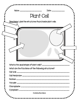 Plant & Animal Cell Diagrams