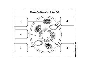 Plant & Animal Cell Flip Chart