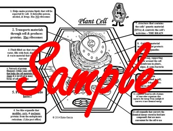 Plant Animal Cell Foldables