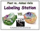 Plant & Animal Cell Sort (VA SOL 4.7a)