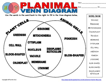 Plant animal cell venn diagram by science teacher resources tpt plant animal cell venn diagram ccuart