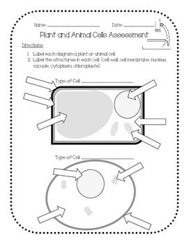 Plant & Animal Cells Assessment