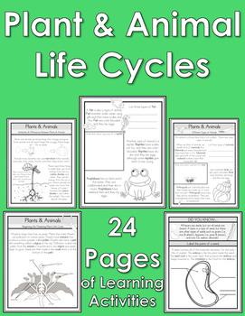 Plant & Animal Life Cycles