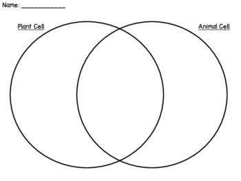 Plant Animal Cell Venn Diagram - General Wiring Diagram