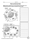 Plant, Animal, and Bacterial Cells Worksheet