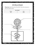 Plant Assessment