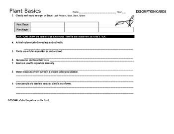 Plant Basics Review