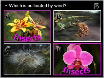 Plants PowerPoint Quiz Game