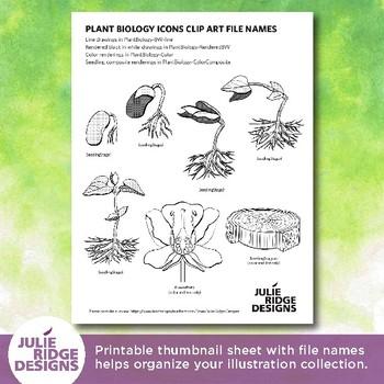 Plant Biology Clip Art Diagrams