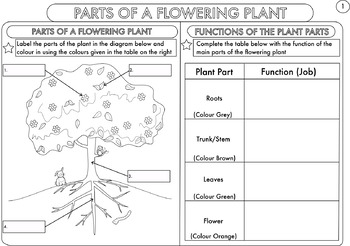 plant biology worksheet pack for kindergarten students tpt. Black Bedroom Furniture Sets. Home Design Ideas