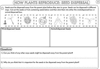 plant biology worksheet pack for kindergarten students tpt. Black Bedroom Furniture Sets. Home Design Ideas