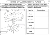 Plant Biology Worksheet Pack for Kindergarten Students