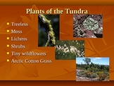 Plant Biomes of the World Power Point