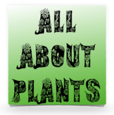 All About Plants: K-3 make a book about what a plant has, provides, and requires
