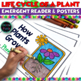 Plant Life Cycle - Emergent Reader  plus Posters PreK Kind