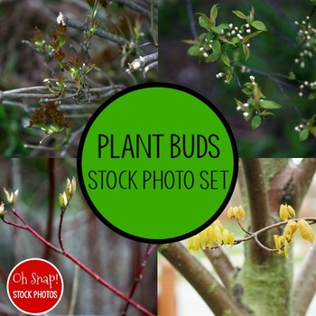 Plant Buds Stock Photo Pack