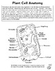 Plant Cell Anatomy Color and Label Worksheet