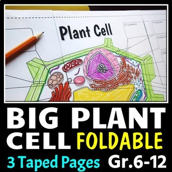 Plant Cell - Big Foldable for Interactive Notebook or Binder