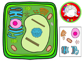 Plant Cell and Organelles Clipart (Personal & Commercial Use)