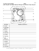 Plant Cell Color Page, Worksheet, and Quiz Ce-2