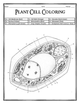 Plant Cell Coloring by Dustin Hastings | Teachers Pay Teachers