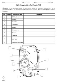 PDF Plant Cell Coloring Worksheet with Questions & Answer Key | TpT