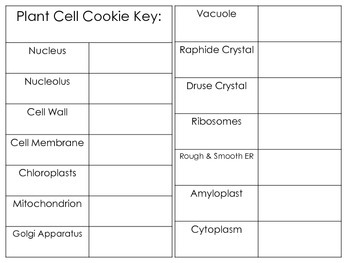 Plant Cell Cookies ~ An Engaging Culminating Activity for a Plant Unit