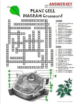 Plant Cell Crossword with Diagram {Editable}