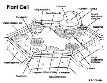 Plant Cell Diagram by Tim's Printables | Teachers Pay Teachers