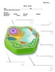 Plant Cell Diagram Study Guide