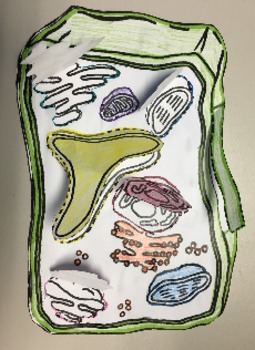 Plant Cell Flip Book