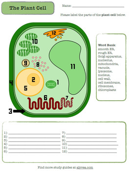 Plant Cell Labeling Printable Worksheet