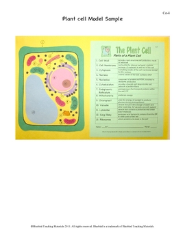 Plant Cell Model and Quiz  Ce-4