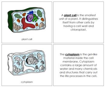 Plant Cell Nomenclature Book