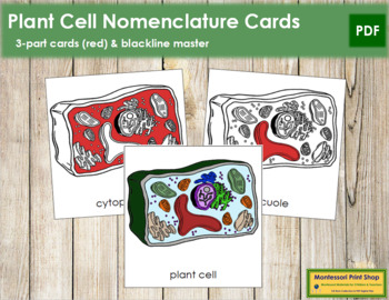 Plant Cell Nomenclature Cards (Red)