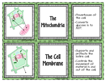 Plant Cell Organelles - Card Sort