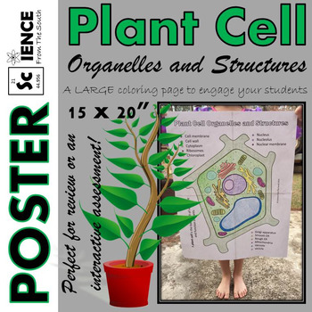 Plant Cell Organelles and Structures Coloring Poster for Review or Assessment