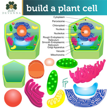 Plant Cell Parts