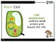 Plant Cell PowerPoint