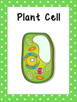 Plant Cell Printable Posters. Elementary Biology. Classroom Accessories.