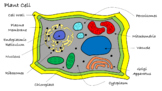 Plant Cell Science Journal Illustration