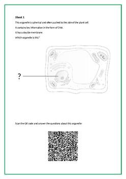 Plant Cell Structure QR Code Activity