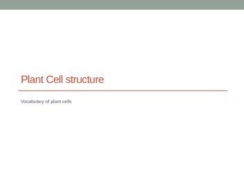 Plant Cell Vocabulary