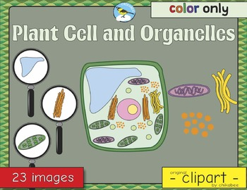 Plant Cell and Organelles Clip Art