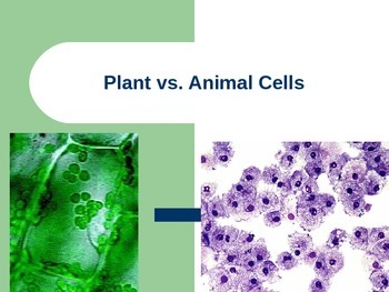 Plant Cell vs. Animal Cells