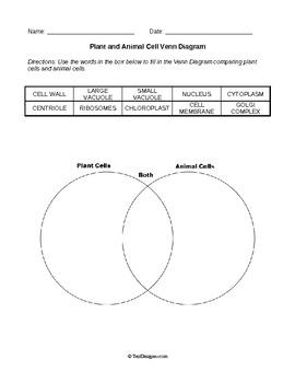 Plant Cells, Animal Cells, and Mitosis - Worksheets Bundle