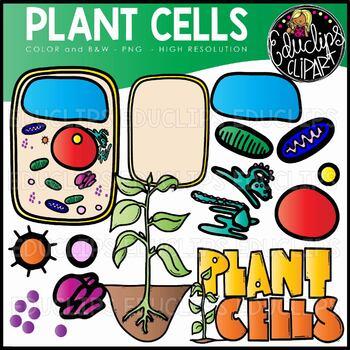 Art set. Plant cells clip educlips