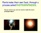 Plant Cells & Edible Cell-O Lab Experiment - Lesson Plan, Presentation, more