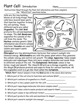 Plant Cells - Introduction and Diagram Activities