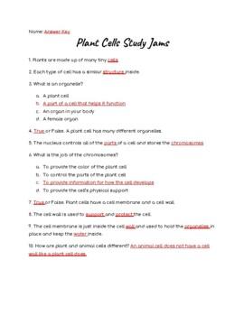 Plant Cells Study Jams Worksheet
